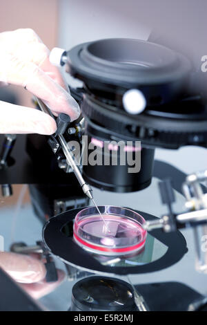 Technician using a light microscope to inject human sperm into a human egg cell (ovum) during in vitro fertilisation - Stock Photo