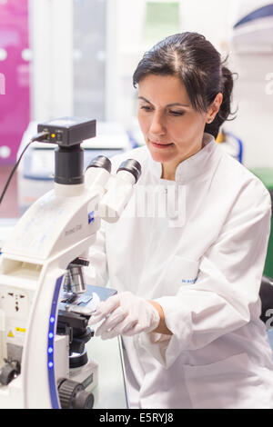 Female technician using a light microscope to study blood smear in a medical laboratory. - Stock Photo