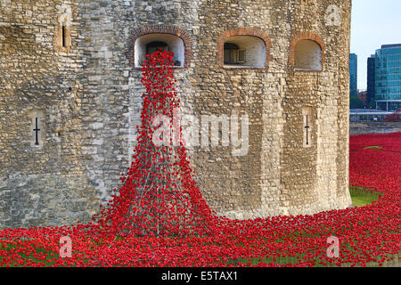 London, UK. 5th August 2014. The sea of poppies around the Tower of London at the opening of the  Blood Swept Lands - Stock Photo