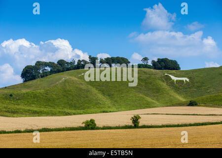 The Cherhill White Horse near Calne Wiltshire England UK. JMH6250 - Stock Photo