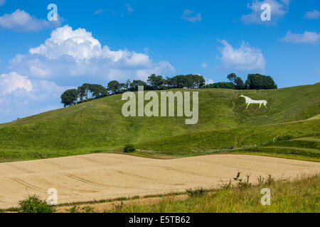 The Cherhill White Horse near Calne Wiltshire England UK. JMH6251 - Stock Photo
