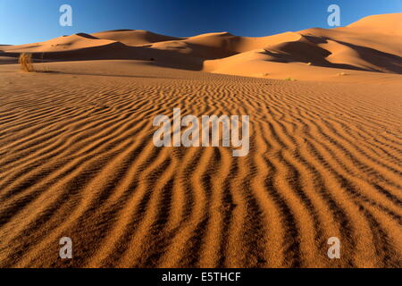 Orange sand dunes and sand ripples, Erg Chebbi sand sea, Sahara Desert near Merzouga, Morocco, North Africa, Africa - Stock Photo