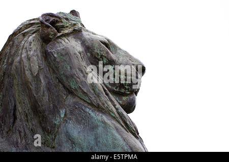 Bronze male lion statue - Stock Photo