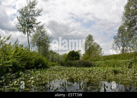 An abundance of plants in the water whilst kayak paddling on the River Stour Suffolk / Essex between Nayland and - Stock Photo