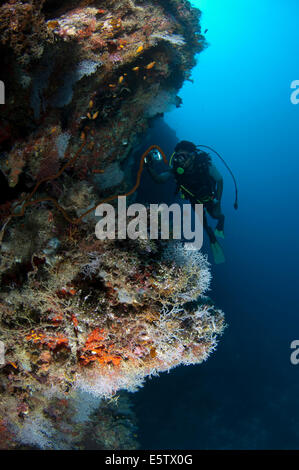 Diver on a steep coral reef with colourful soft corals in Dhaalu Atoll - Stock Photo