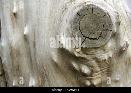 bark wood as natural background - Stock Photo