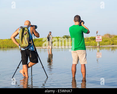 Florida, USA - group of bird watchers taking photos of bird on a bird protection sign in Fort de Soto county park - Stock Photo