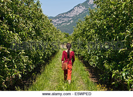 Rear view of woman strolling through pear orchard, Arco, Trentino, Italy - Stock Photo