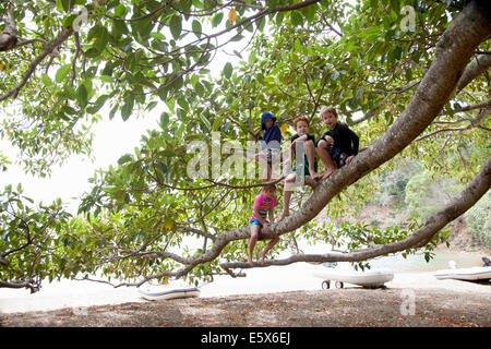 Portrait of girl and three brothers sitting in tree at beach - Stock Photo