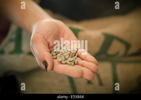 Close up of woman's hand holding raw coffee beans in cafe - Stock Photo