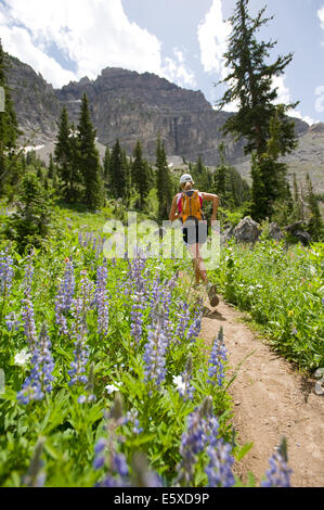 Annie Aschim trail running Albion Basin in Alta, Utah. - Stock Photo