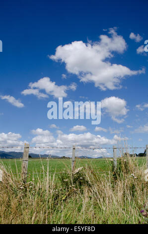 Blue sky, white clouds and green field with barbed wire fence, Pirinoa, near Martinborough, Wairarapa, North Island, - Stock Photo