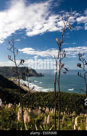 View of Piha beach through flax bushes, west coast, North Island, New Zealand - Stock Photo