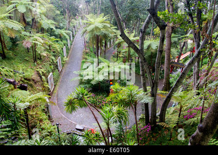 Monte gardens, Funchal, Madeira, Portugal Stock Photo: 72548230 - Alamy