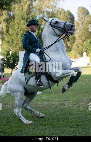 Bratislava, Slovakia. 10th Aug, 2014. Demonstration of classical dressage of Lipizzan stallion during Mercedes-Benz - Stock Photo