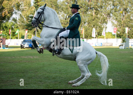 Bratislava, Slovakia. 10th Aug, 2014. Demonstration of classical dressage of Lipizzan stallion during Mercedes-Benz - Stock Photo