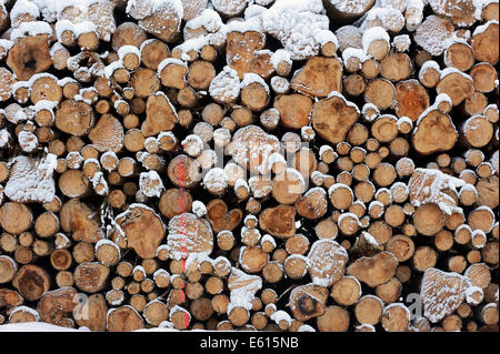 Stack of wood in winter, North Rhine-Westphalia, Germany - Stock Photo