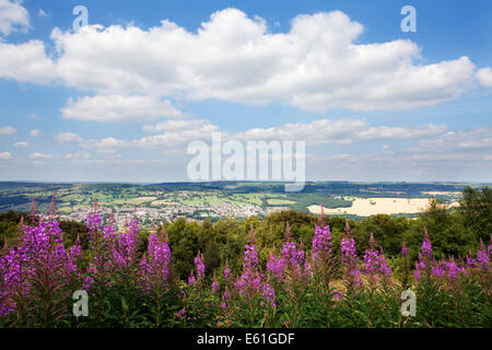 Rosebay Willow Herb along the Dales Way overlooking Otley and Wharfedale from The Chevin West Yorkshire England - Stock Photo