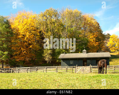 horse and barn in autumn - Stock Photo