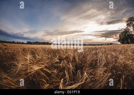 Rice cultivation in Arkansas