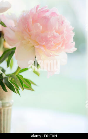 Close-up of pink flower in vase - Stock Photo