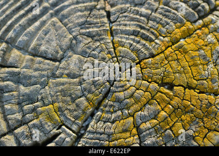 Wooden fence close up - Stock Photo