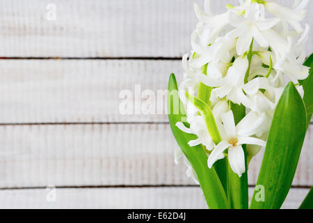 spring white flower on wooden background, rustic - Stock Photo