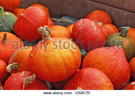 Harvested pumpkins in a wooden box, close up. - Stock Photo