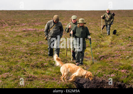 Coverdale, Yorkshire Dales, UK 12th August, 2014.  Grouse Shooting on The Glorious Twelfth,   the official opening - Stock Photo