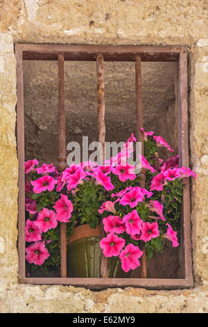 Window opening and rusty metal grill with flower pot containing Petunia Surfinia flowers in bloom - Stock Photo