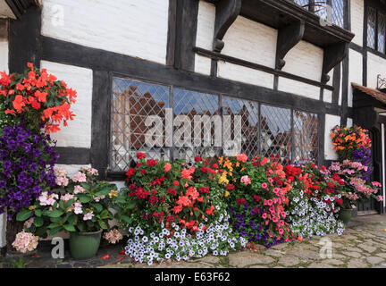 Display of summer flowers around a window on the front of an old timbered building in Biddenden, Kent, England, - Stock Photo
