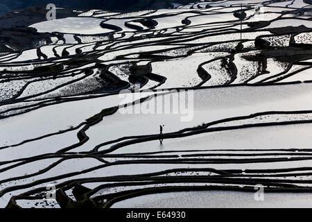 Reflections off water filled rice terraces, Yuanyang County, Honghe, Yunnan Province, China - Stock Photo