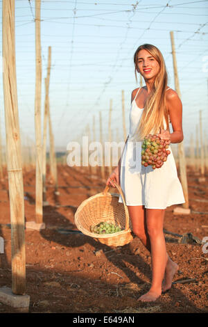 Young teen girl during harvest Model release available - Stock Photo