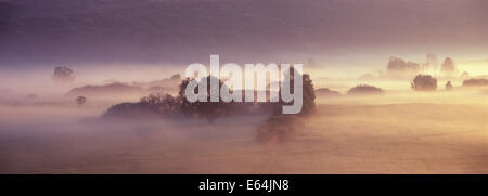 Natural meadow Fog Mist Roztocze Poland Stock Photo