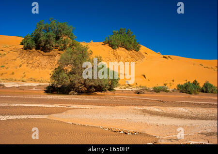 Dried up riverbed, after rain falls, Wadi against sand dunes with green bushes, Erg Chebbi, sand desert, Sahara - Stock Photo