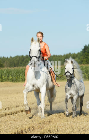 Woman riding bareback on a Bavarian horse, galloping in a stubble field and leading a pony - Stock Photo