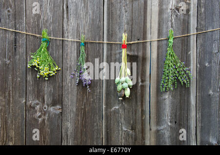 medical herbs flowers bunch and poppy heads on old wooden wall - Stock Photo