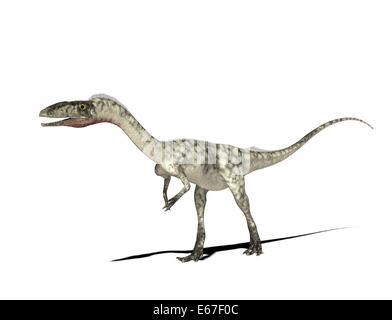 Dinosaurier Coelophysis / dinosaur Coelophysis - Stock Photo