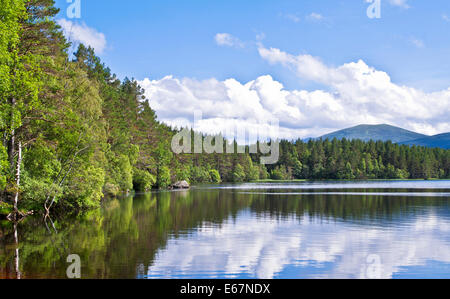Mixed woodland reflected in Loch Garten, RSPB Abernethy Forest National Nature Reserve, Cairngorms National Park, - Stock Photo