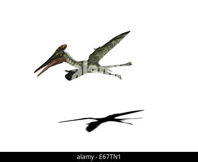 Dinosaurier Pterodactylus / dinosaur Pterodactylus - Stock Photo