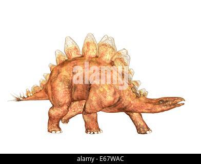 Dinosaurier Stegosaurus / dinosaur  Stegosaurus - Stock Photo