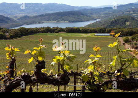 Hennessey Lake viewed from Continuum Estate, Napa Valley, California, USA - Stock Photo