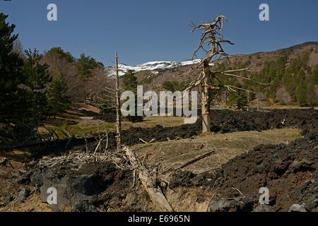 Lava field at Mount Etna, Parco dell'Etna, Sicily, Italy - Stock Photo