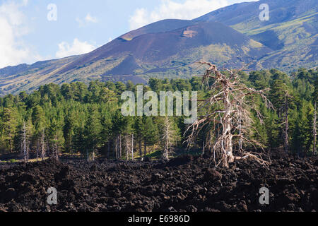 Lava field on the foothills of Mount Etna, Catania, Sicily, Italy - Stock Photo