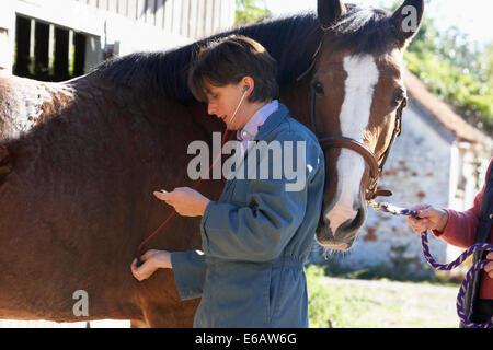 horse,examination,veterinarian,veterinary visit - Stock Photo