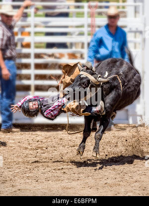Bull Rider In Action Small Town Weekly Bull Riding As A