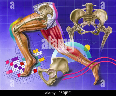 Schematic showing hip and leg motion. - Stock Photo