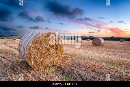 Sunset over bales of barley hay in a field near Padstow in Cornwall - Stock Photo