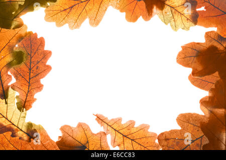 Frame made from dry yellow oak leaves - Stock Photo