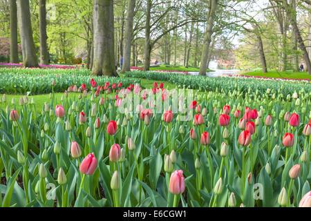 Springtime in Keukenhof Gardens, Lisse, Netherlands. - Stock Photo